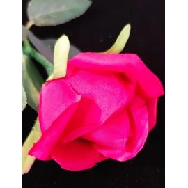 ROSE LUMINEUSE (Jeili Magic)